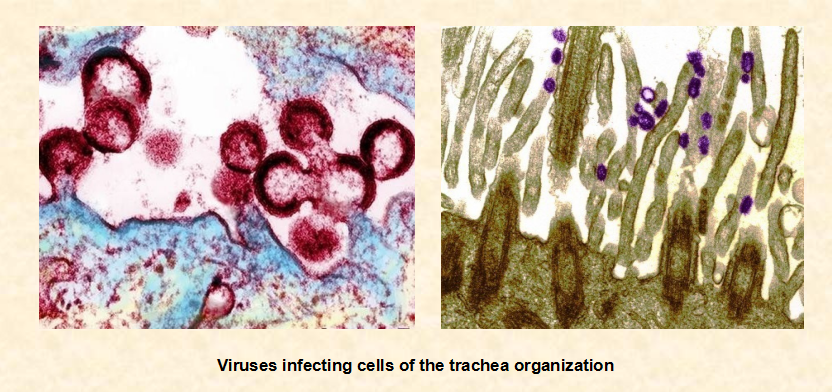 lassa viruse fever analysis biology essay The goal of the consortium is to undertand important aspects of the immune response and spread of viral hemorrhagic fevers, including lassa fever and ebola virus disease by understanding key aspects of these diseases, we are hoping to develop new and effective diagnostics, therapeutics, and vaccines.